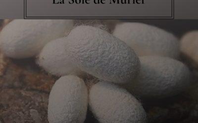 Qu'est-ce que la soie de mûrier ?
